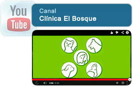 Visita nuestro canal Clinica Veterinaria El Bosque en Youtube.